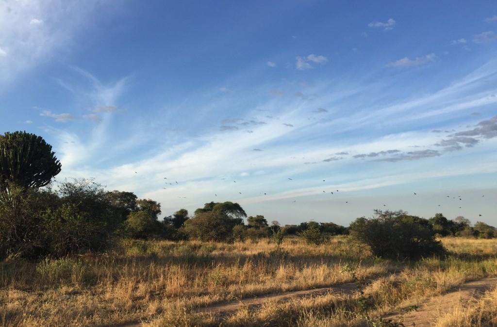 Tanzania Safari Surprises