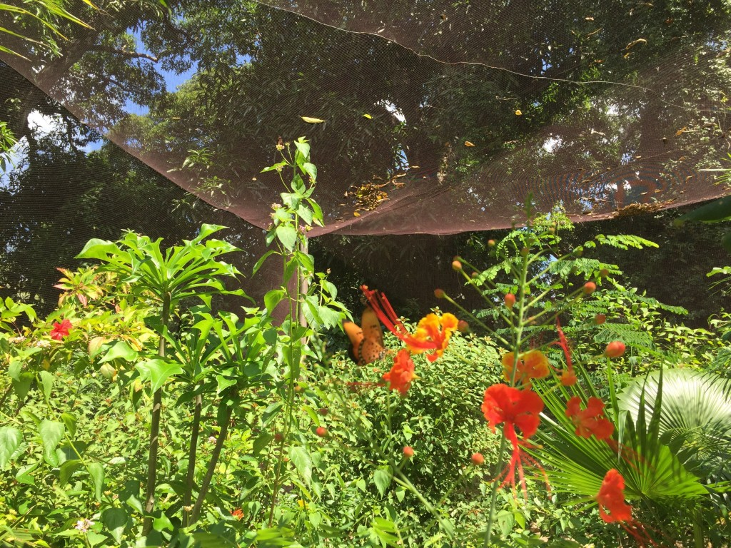 mystery plant and caesalpenia