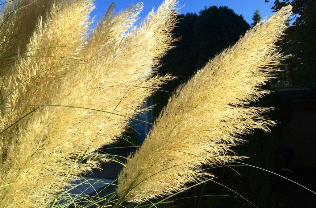 Grasses Having a Moment