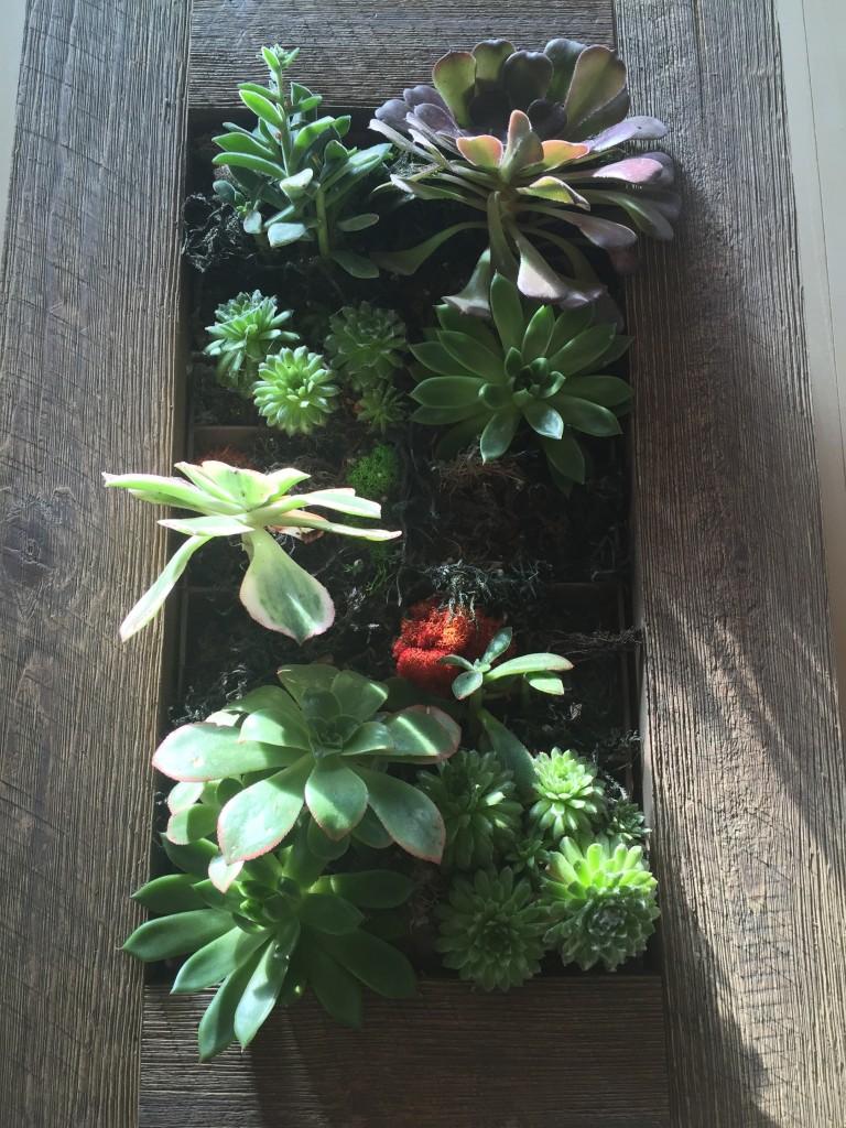 vert box red lichen