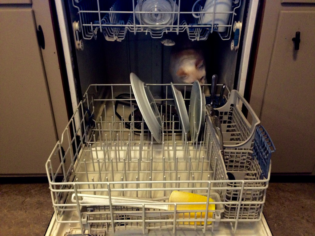 Around here, you need to check before closing the dishwasher.