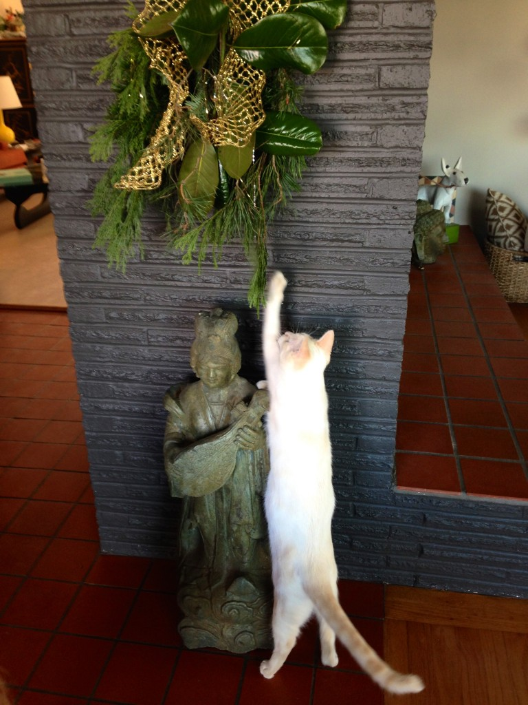Mister checking the holiday swag. That cat can stretch.