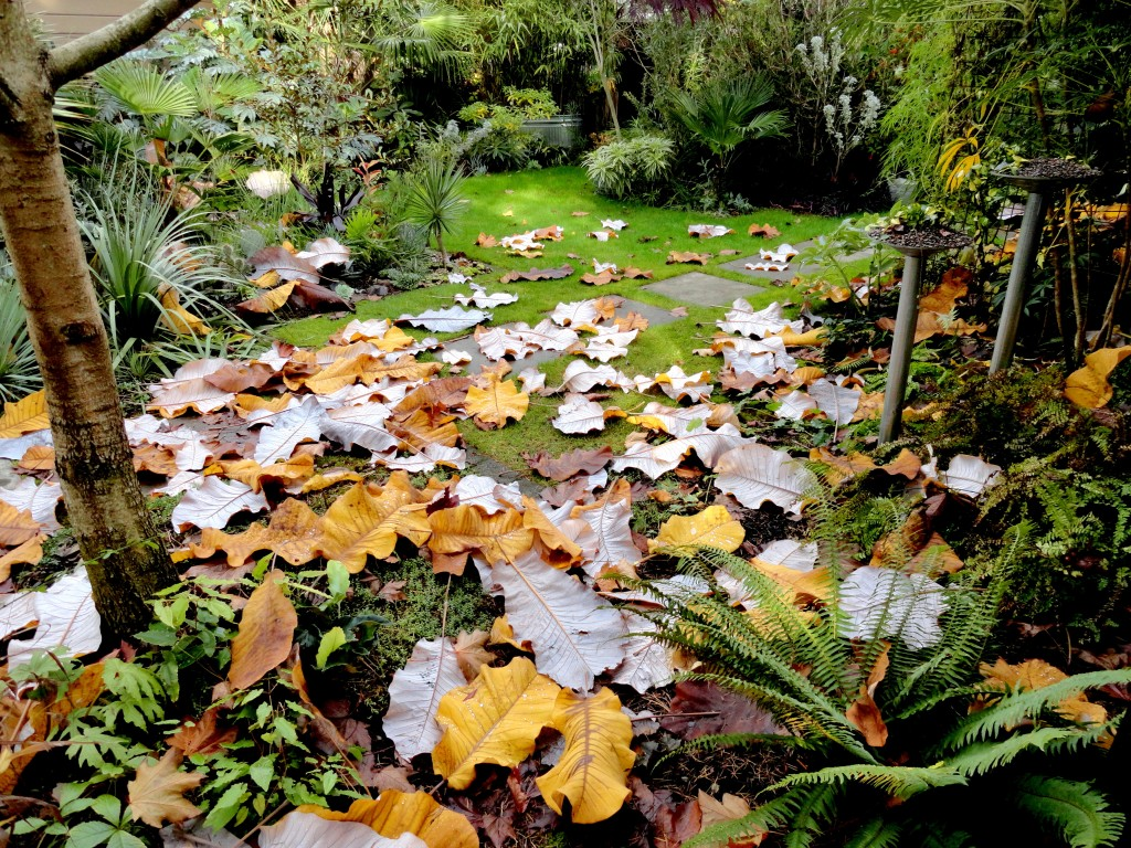 autumn abundance a