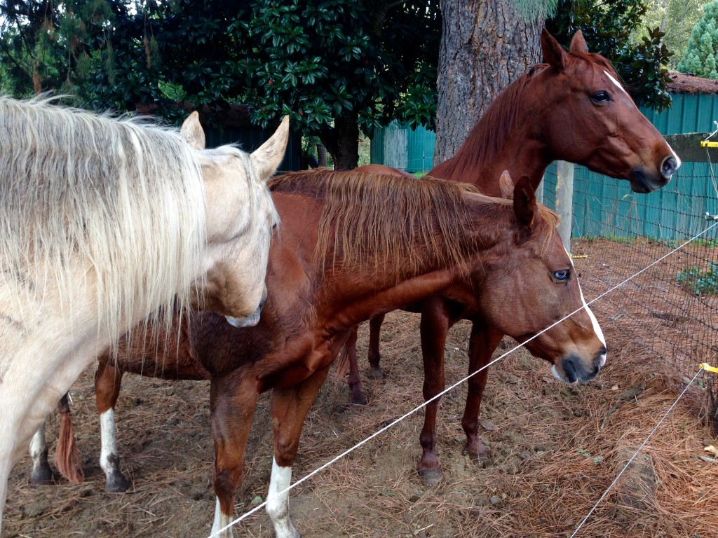 Pretty horses, and so friendly.