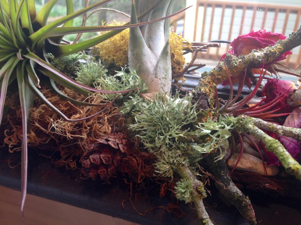 lichen and pinecones