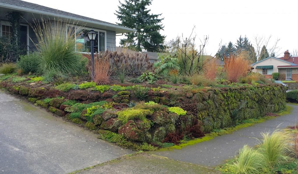 Sea of Juniper garden is due a tidying.