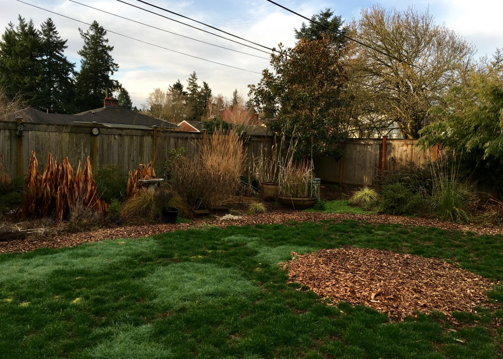 Remember last fall when I started this mulch instead of sod strip project? It doesn't look rectangular does it?