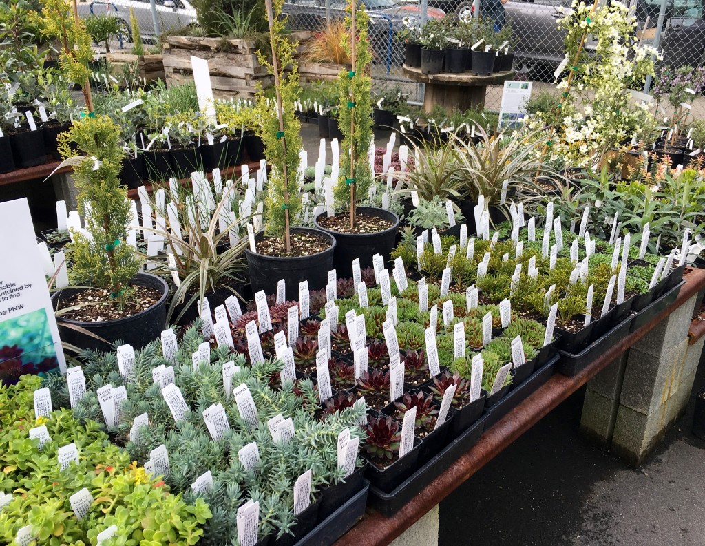 Xera Nursery in PDX packed with fresh wares.