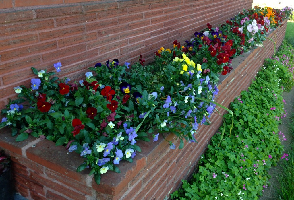 Planter box with pansies. Not that there's anything wrong with it.