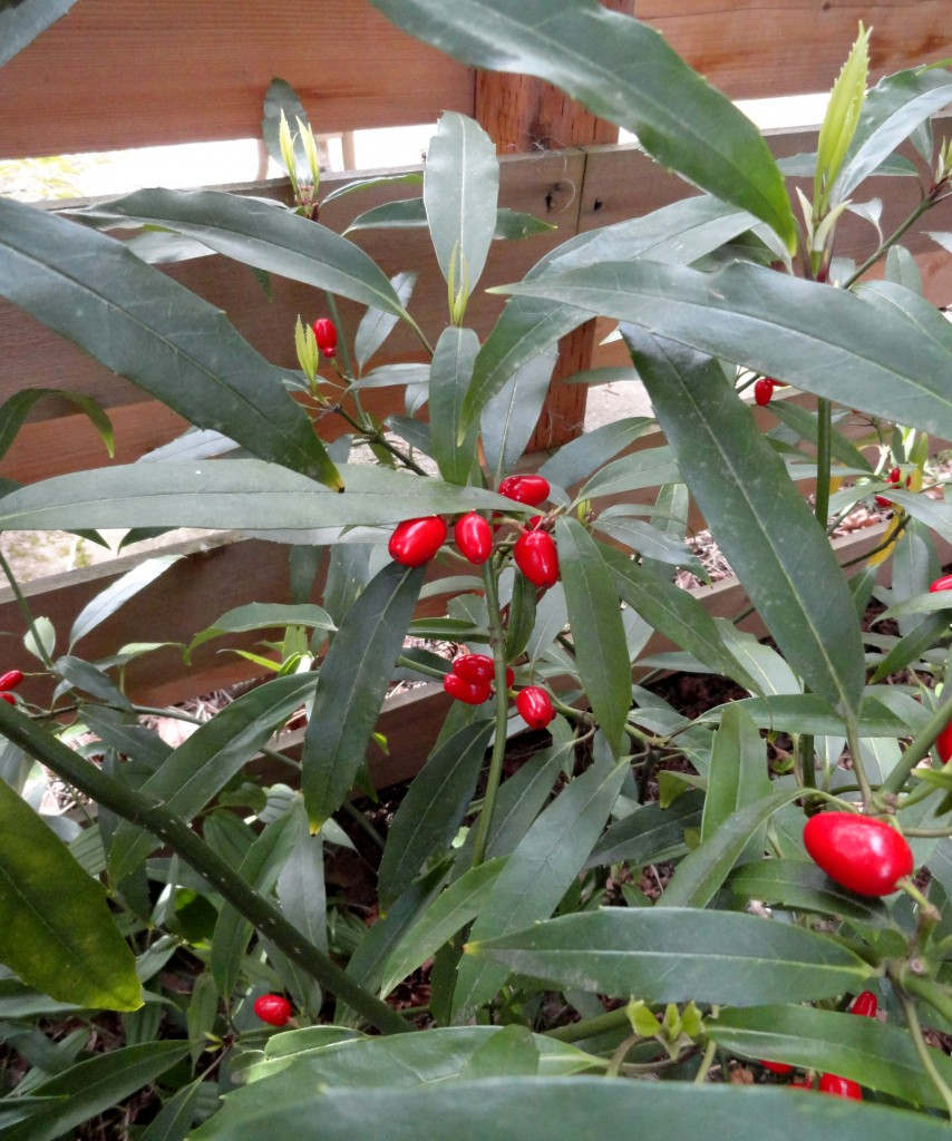 Sombra seca - The Designing Gardener
