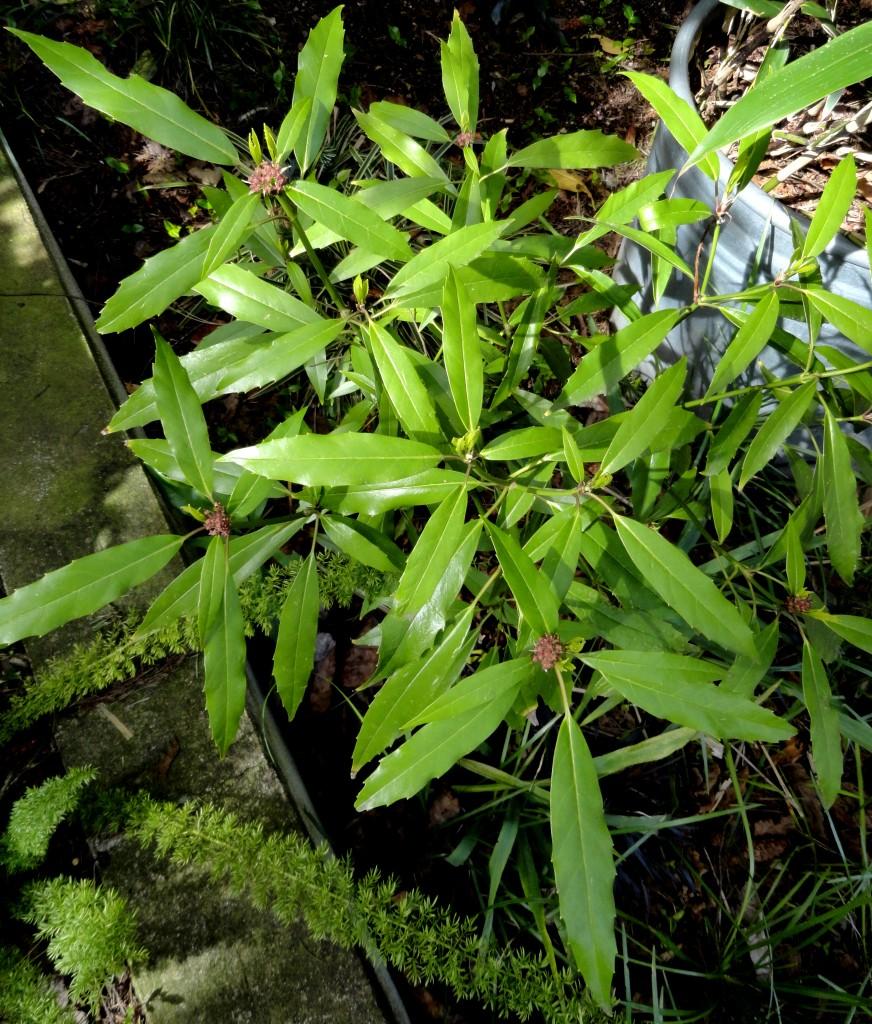 Nueve arbustos para Colorado que incluso los Caballeros de Ni amarían - The Denver Post