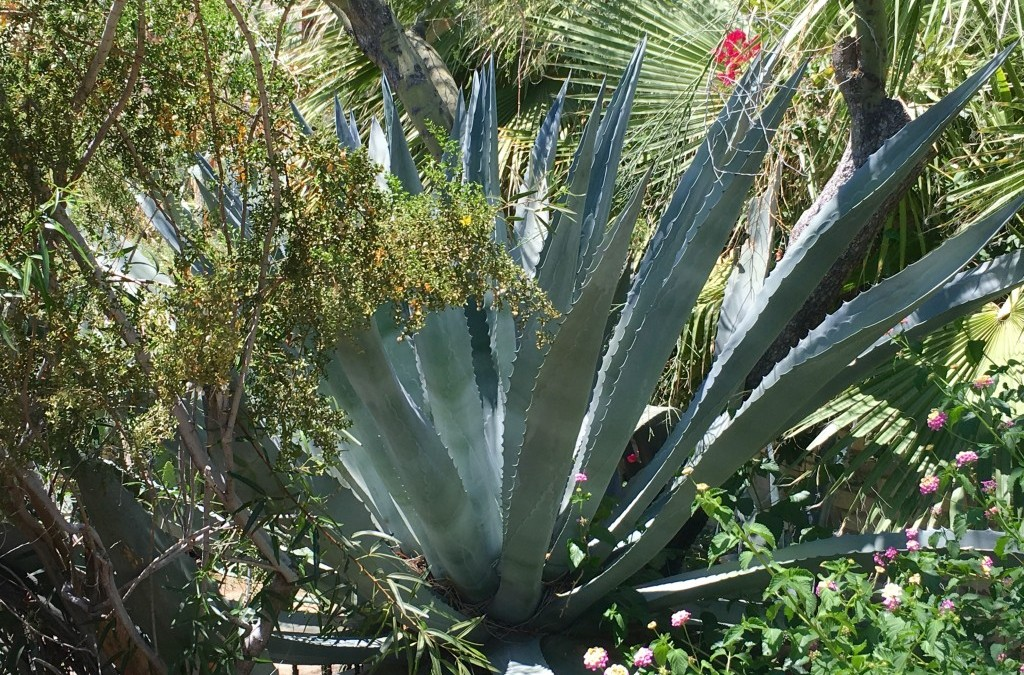 gardens: Palm Springs style