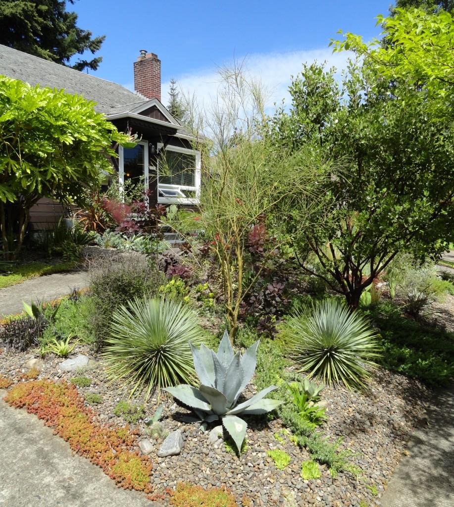 Yucca rostrata and Sedum NOID