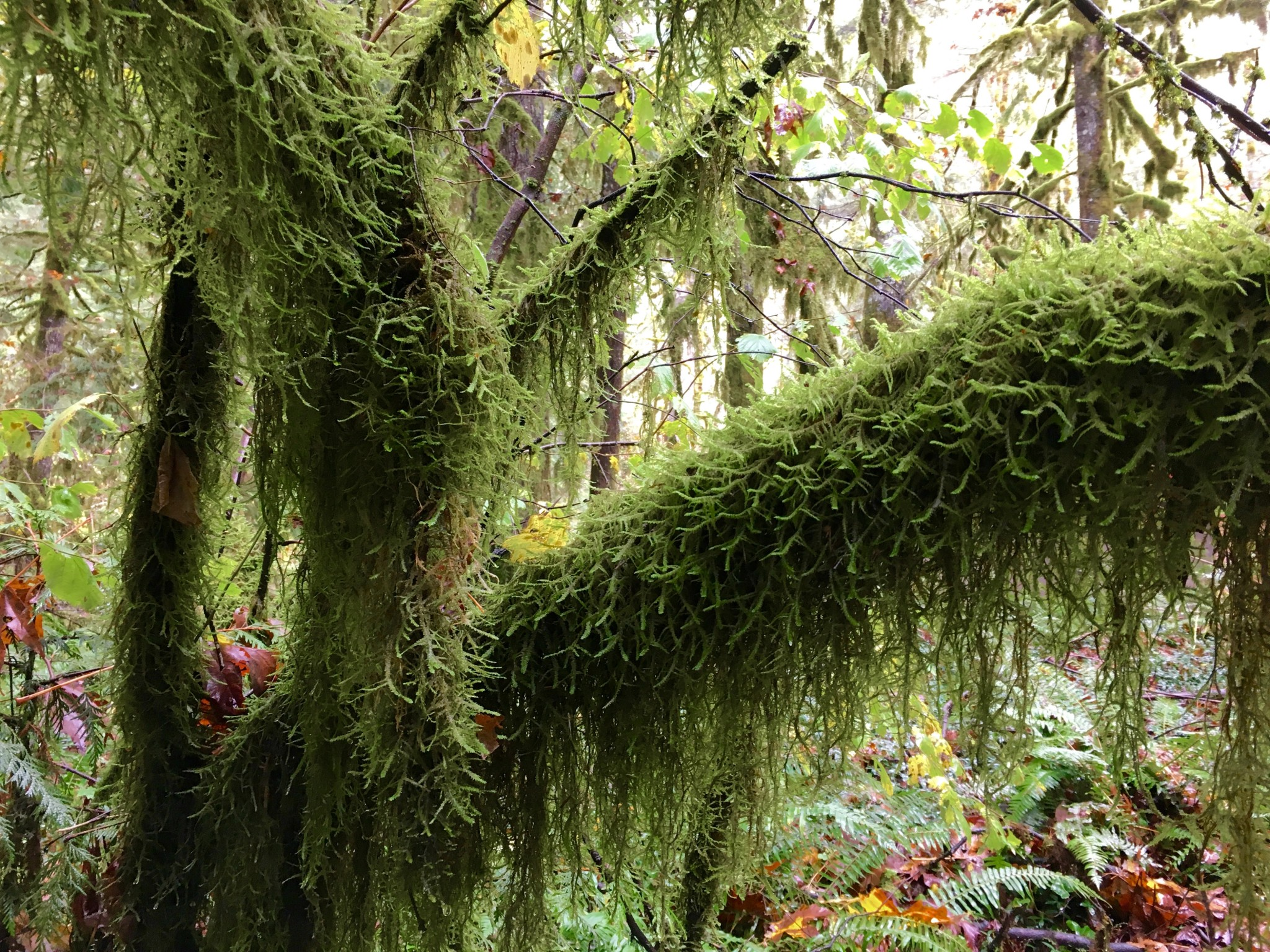Moss in the woods.