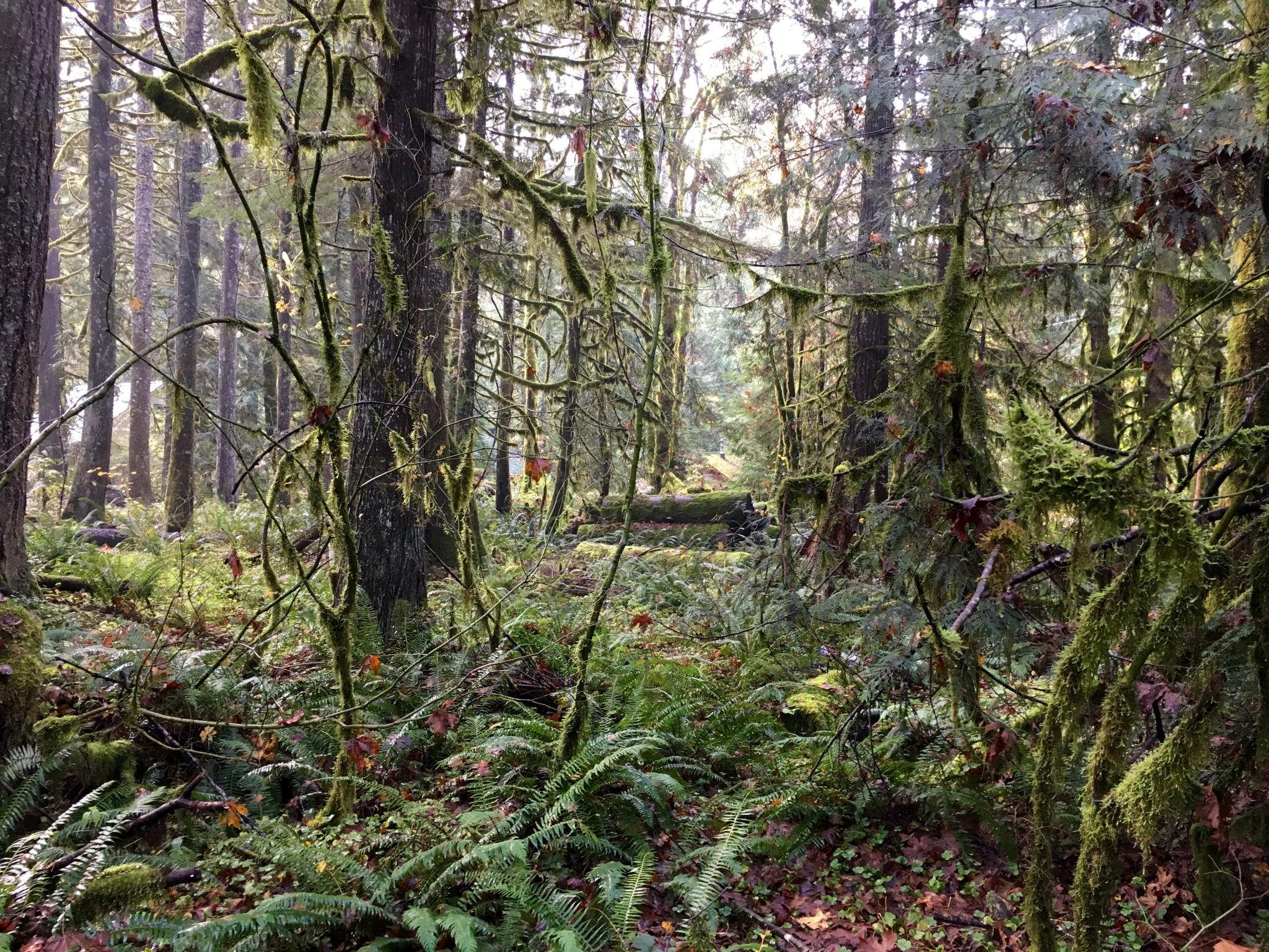 More lovely woods.