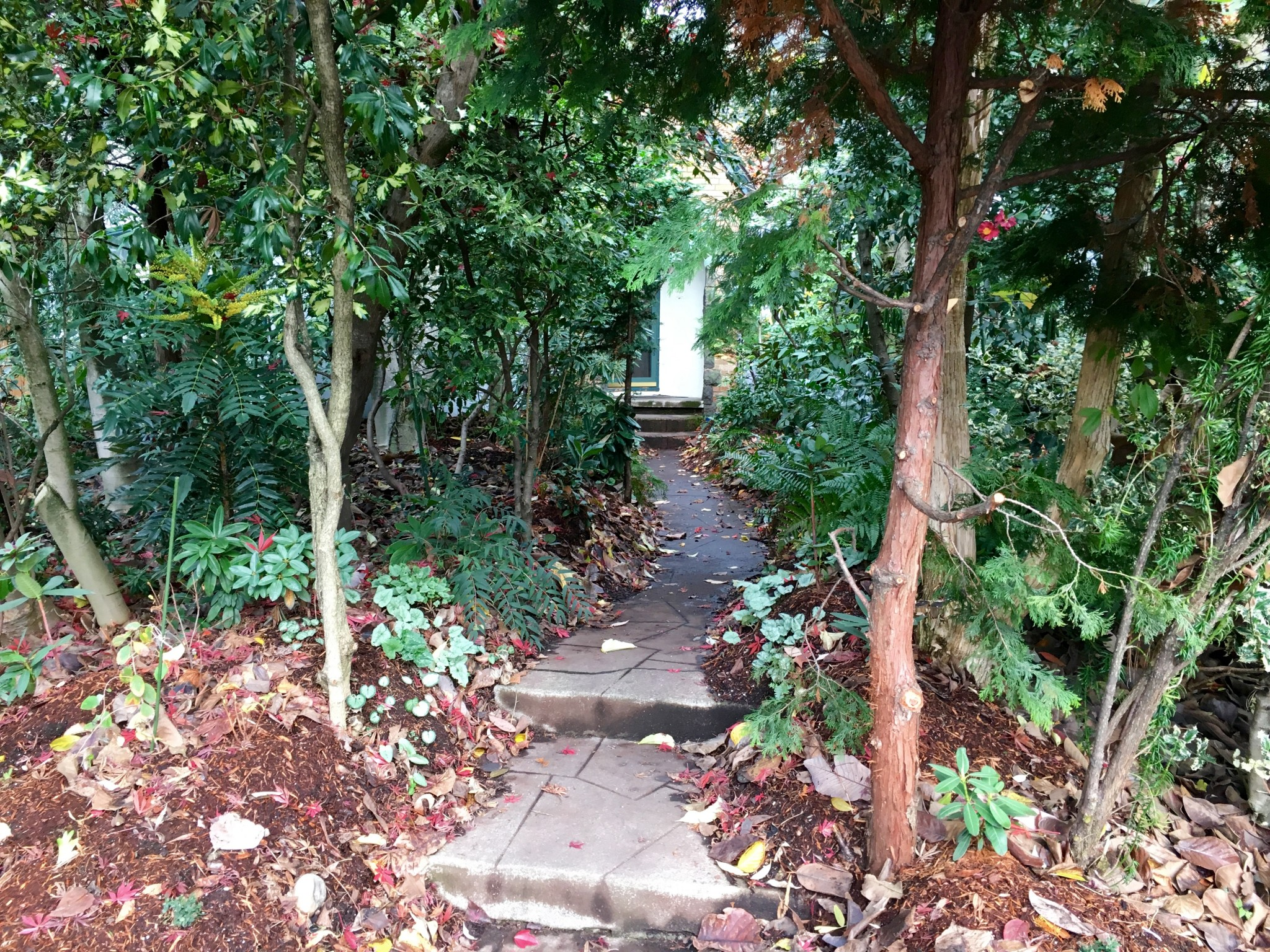 Straight ahead, the path to the house.