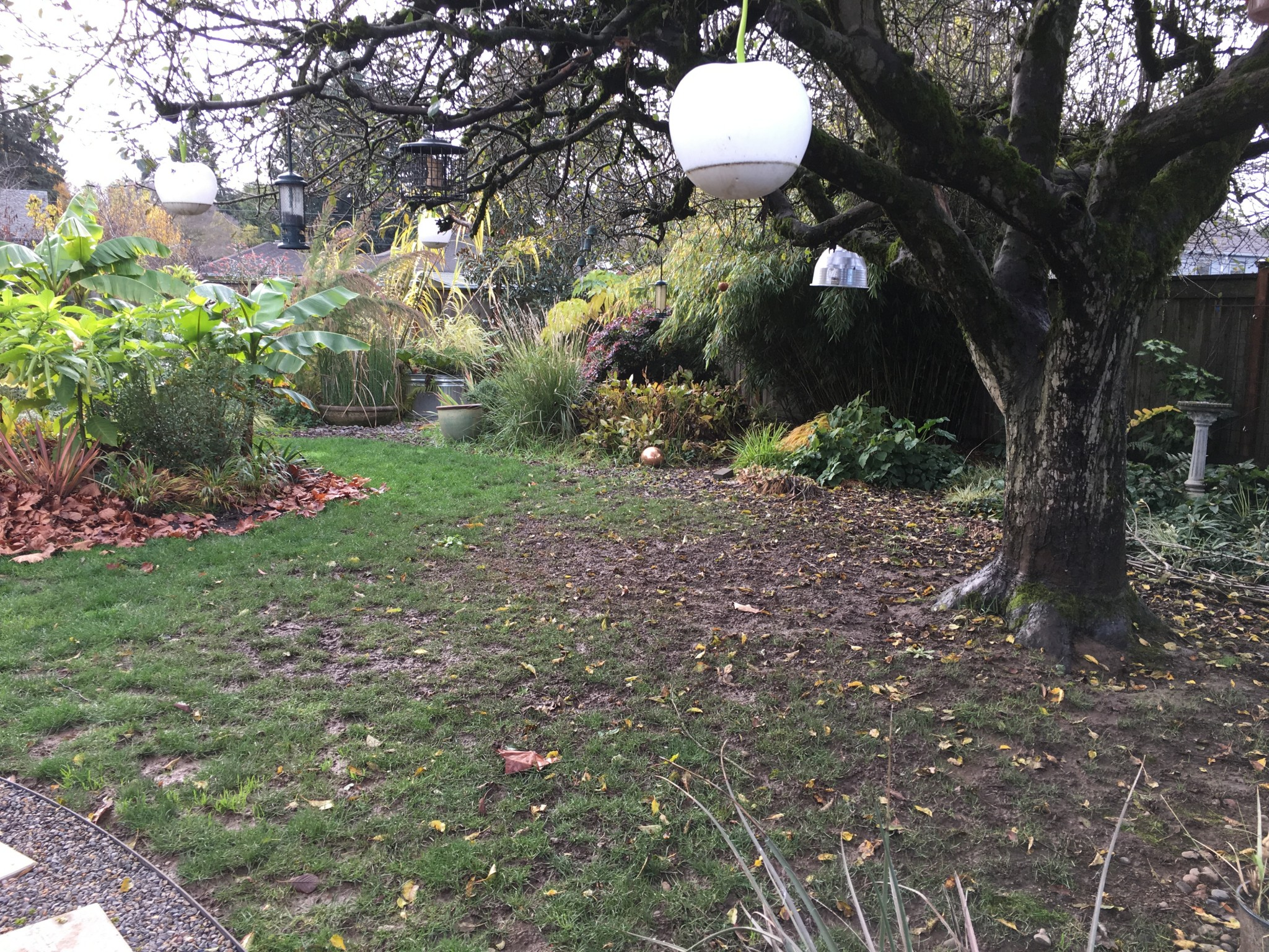 Apple tree with bird feeders and mud below.