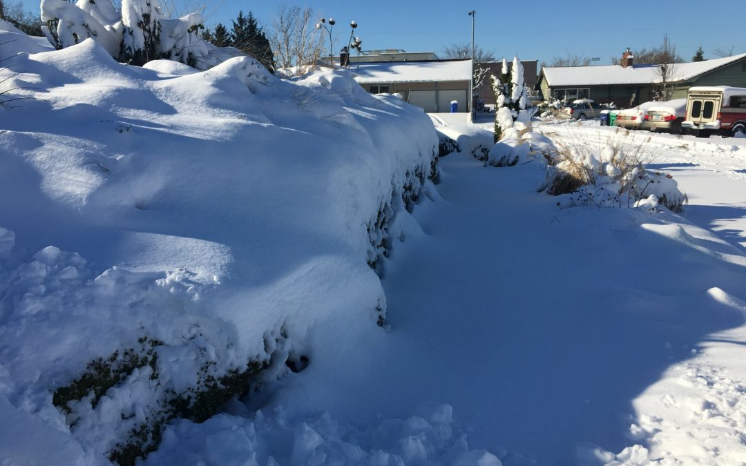 Surprise Snow Storm hits Pacific Northwest: Gardeners Freak Out