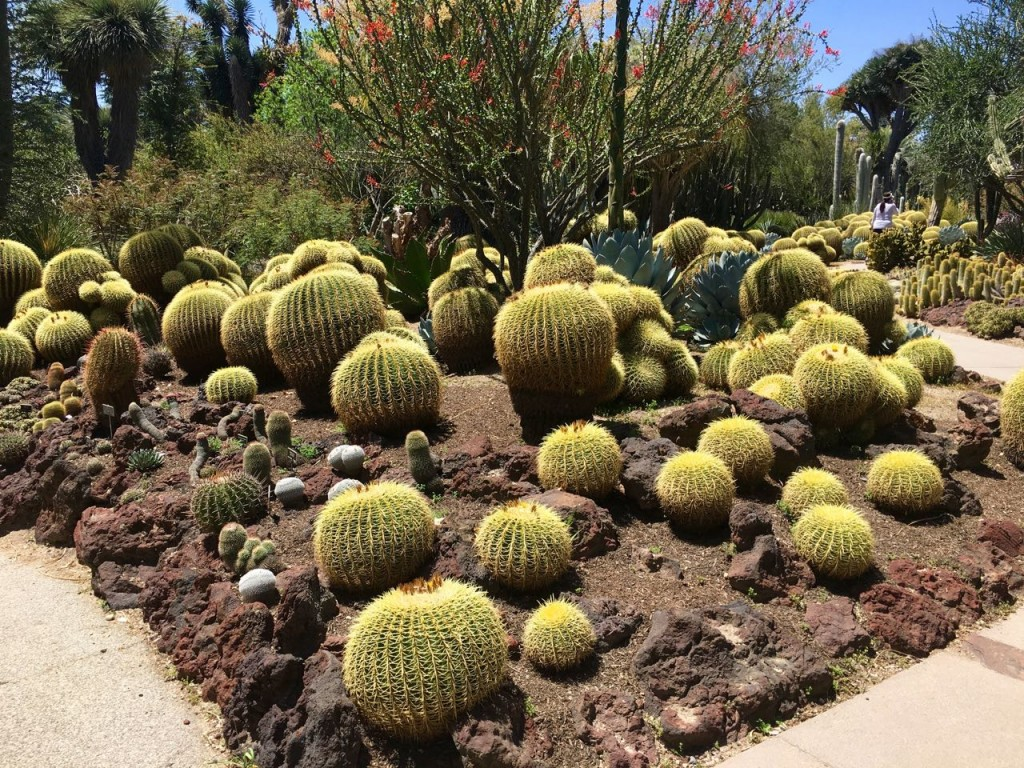 Huntington Gardens: part 3 | Plant Lust