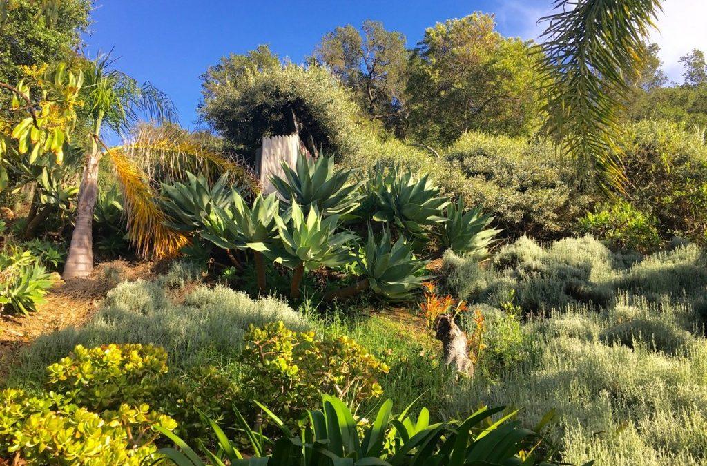 Santa Barbara Garden via Airbnb