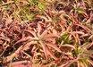 Aloe vanbalenii