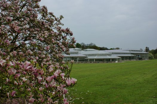 Magnolia Heaven Scent Plant Lust