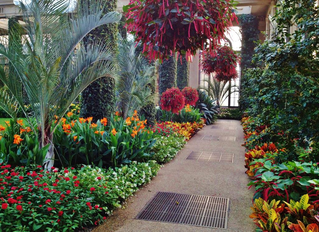 Photo 52333 Acalypha Hispida Plant Lust
