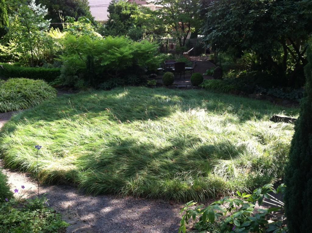 Vanessa Gardner Nagel's sedge circle, Carex flacca.