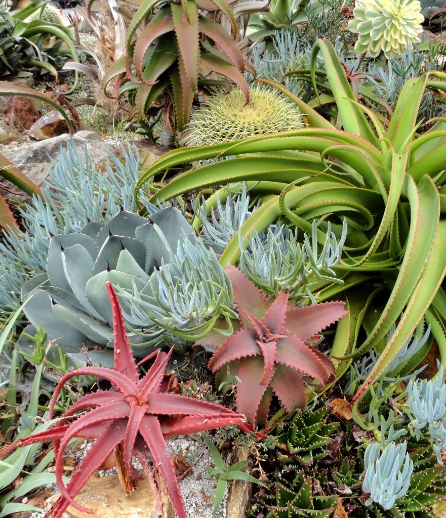 plant lust overload