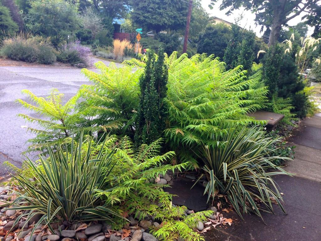 garden 1 hellstrip 4