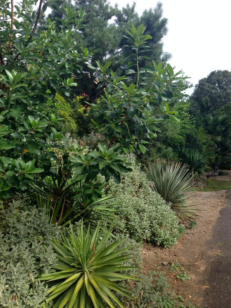 garden 1 border 2