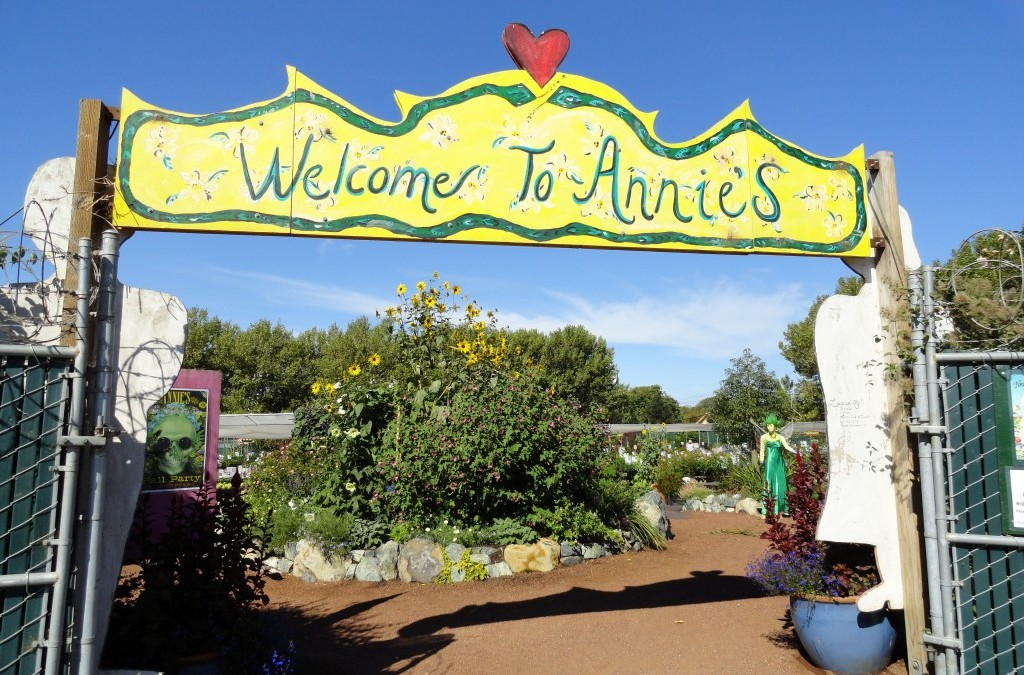 Nursery visit: Annie's Annuals and Perennials