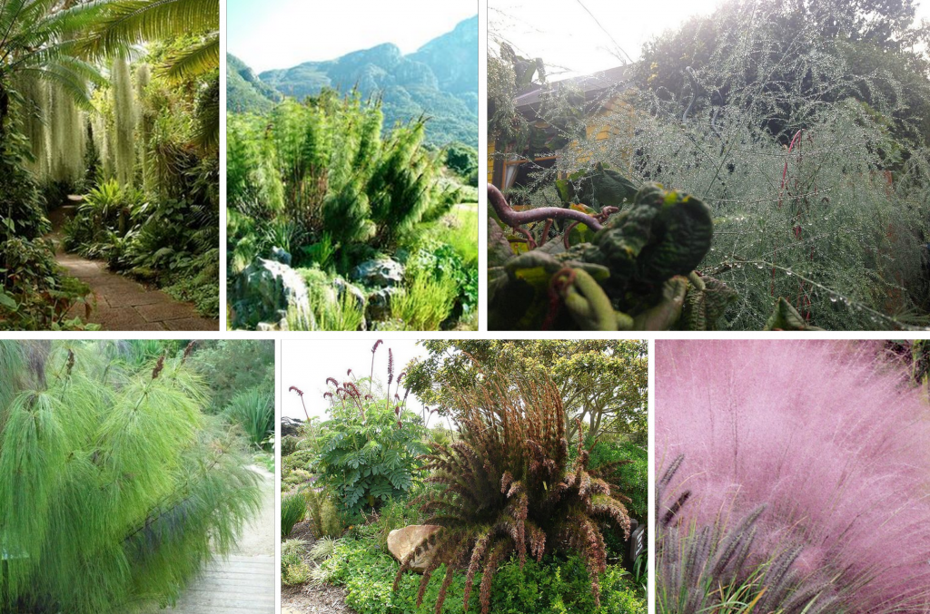 plants: texture!