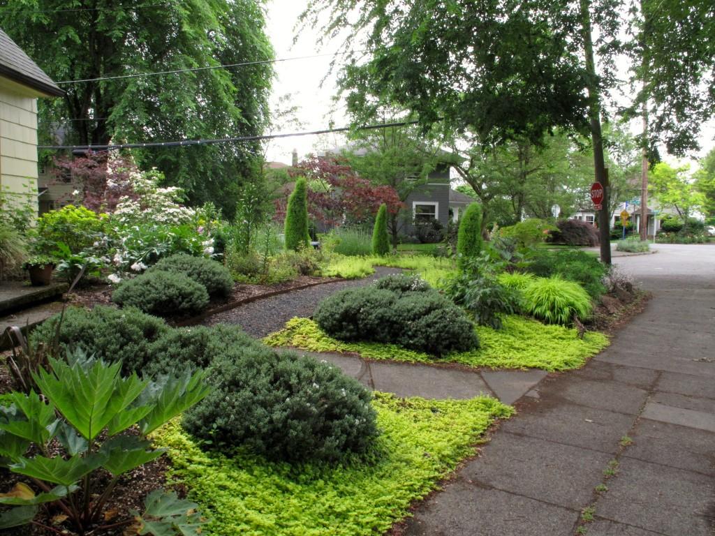 golden groundcover garden