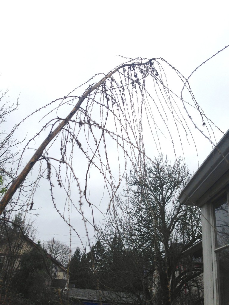 false hemp winter flower stripped