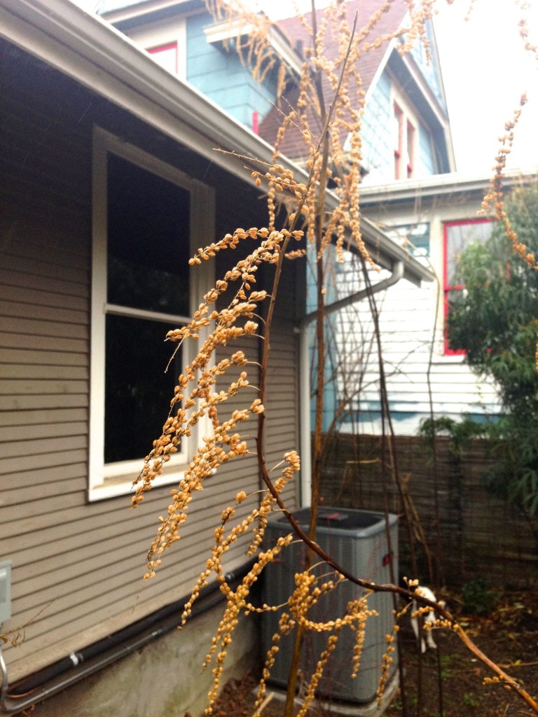 false hemp winter flower 2