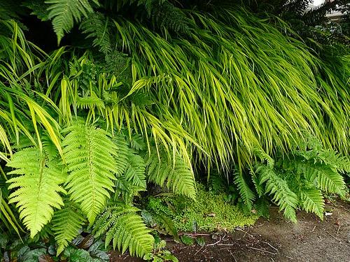 plants en masse