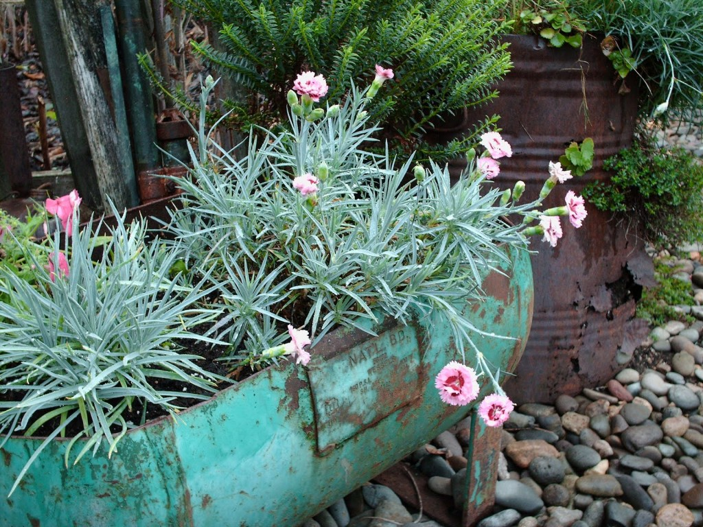 Dianthus foliage seems the perfect match for this unique repurposed container, photo from Gardening with Grace.