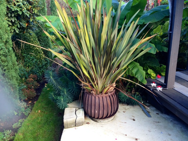 Fan Planter with Phormium