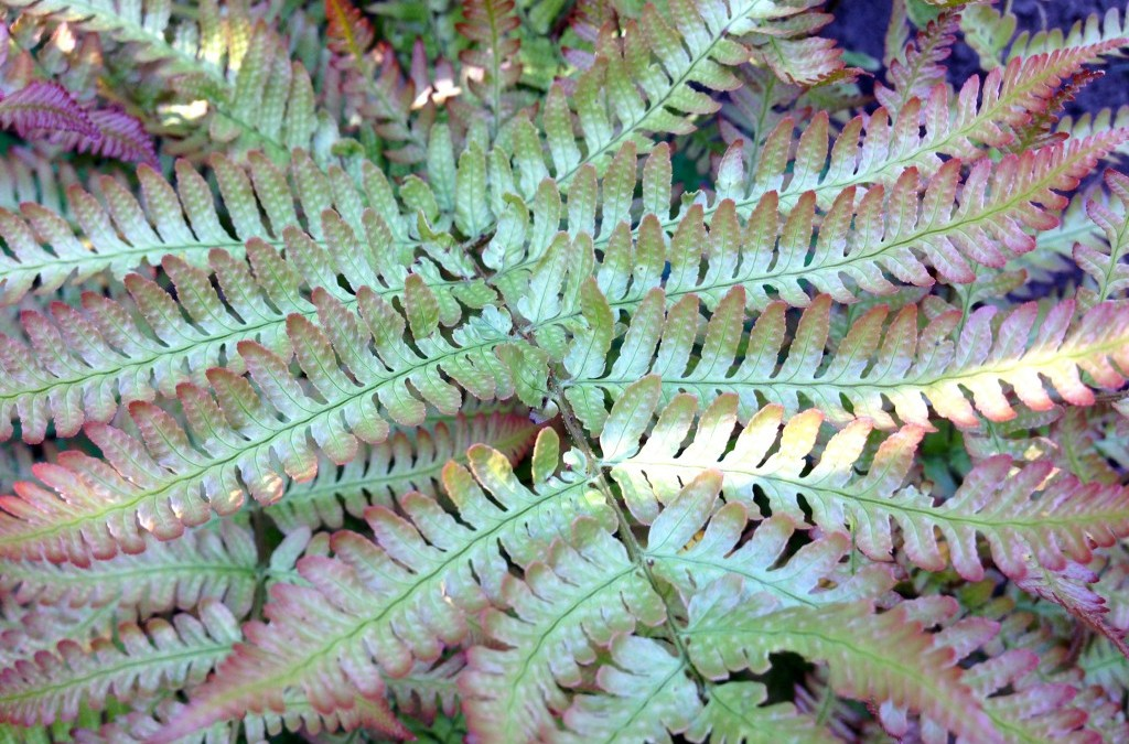 ferns know how to get along