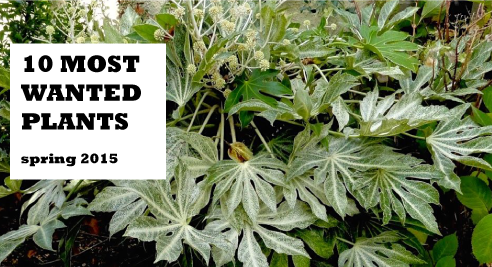 This spring's most requested plants