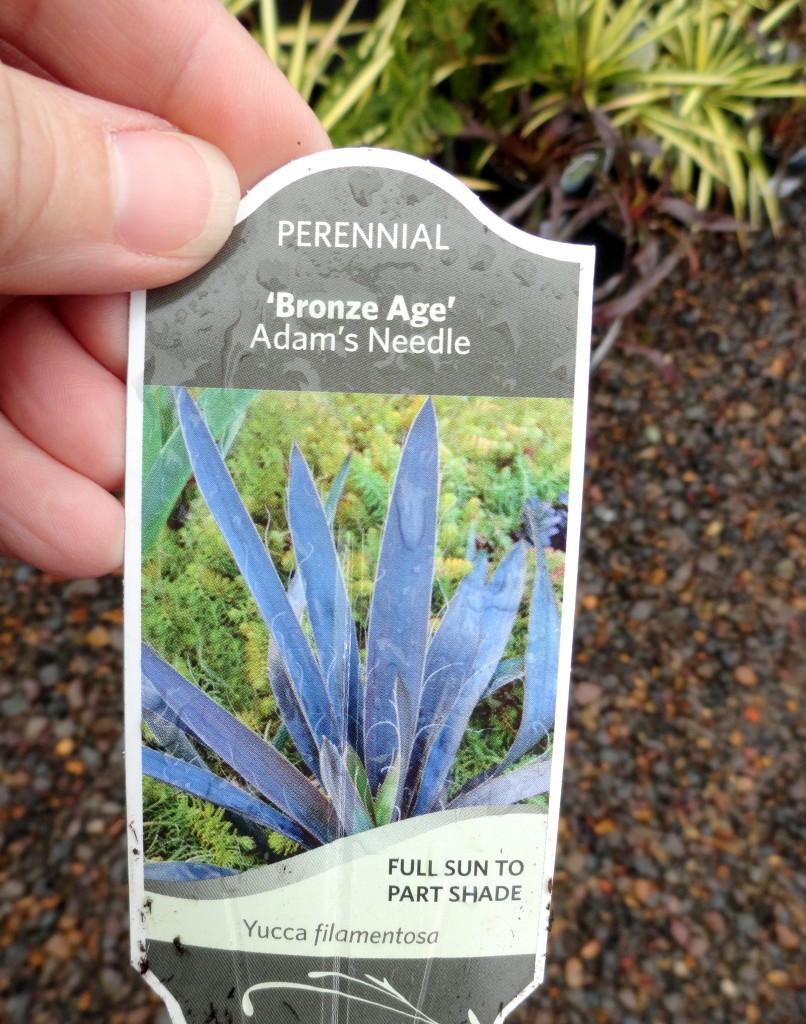Yucca filamentosa 'Bronze Age' label
