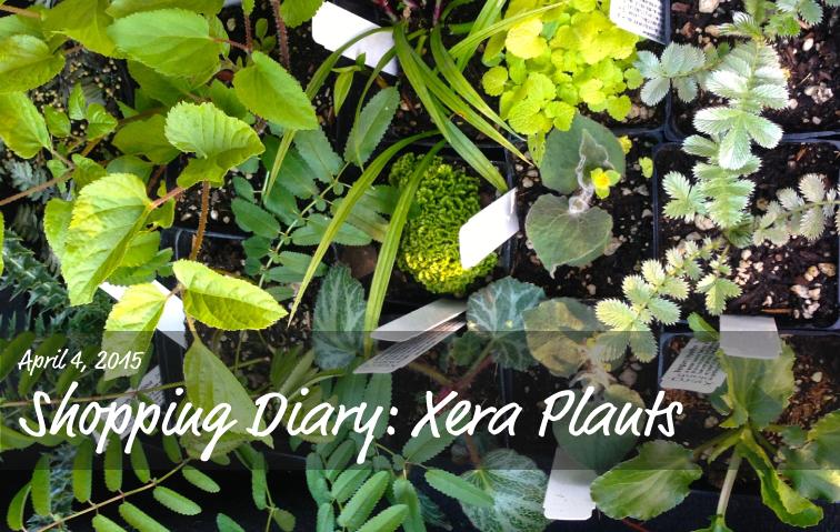 April Plant Shopping at Xera Plants