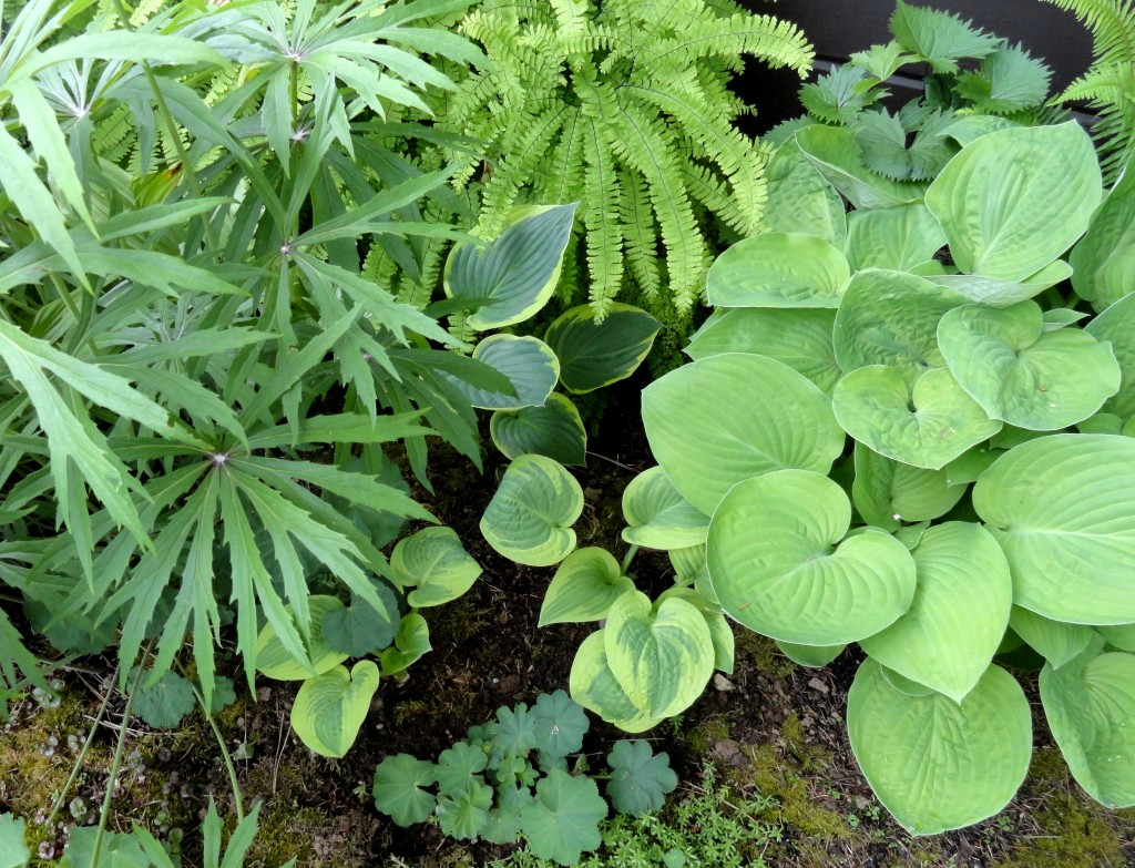 Hosta and shade friends