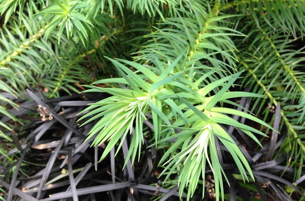 open garden season: Darcy Daniels' digs