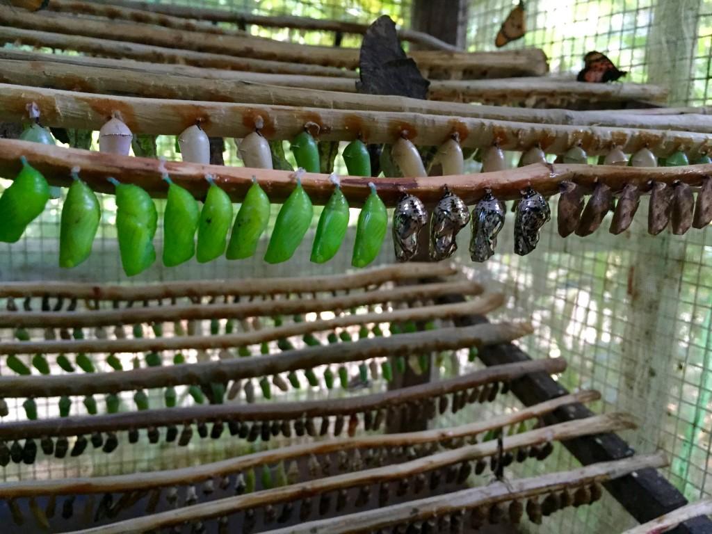 Metalic hanging chrysalis