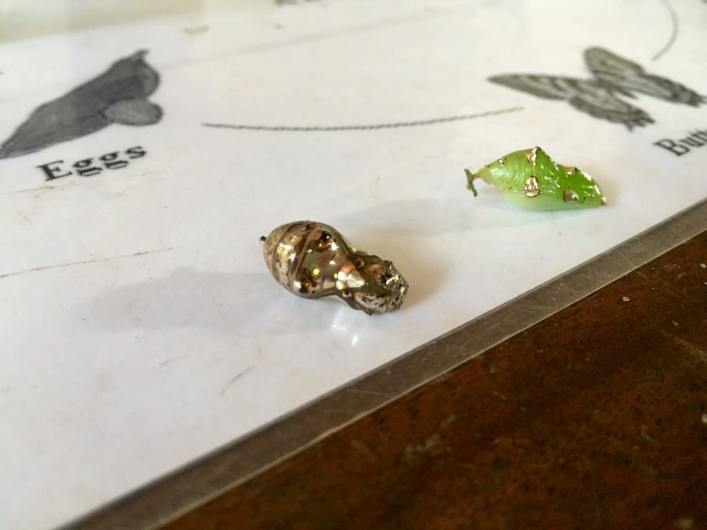 metalic chrysalis