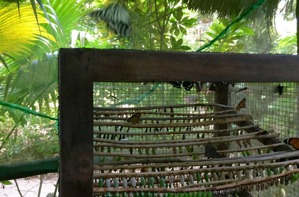 A Visit to the Butterfly Farm