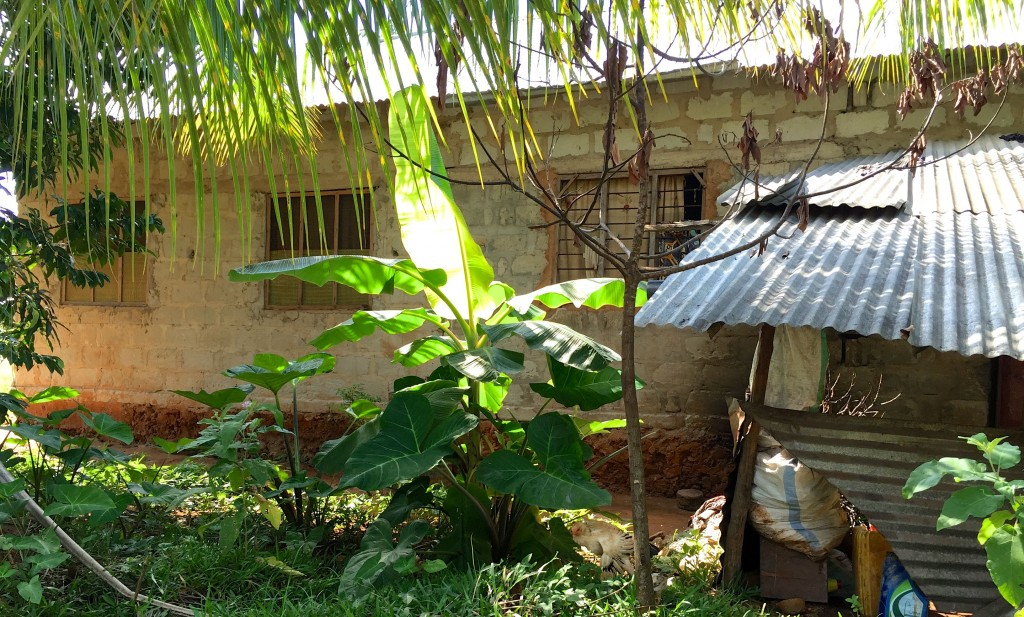 Zanzibar Spice Plantation