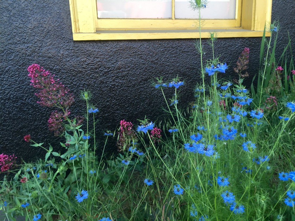 black wall blue flower 2